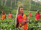 女性の地位向上に貢献するインドの革新的NGOベアフットカレッジ