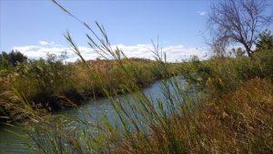 感染源とみられる川