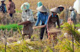インドネシアが貧困削減へ条件付現金給付、社会保障拡充