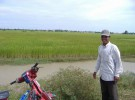 Rice fields behind my driver