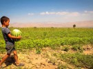 Seeds for Africa's Green Revolution: Can India Help?
