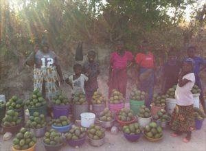 暑い地域でしか採れないマンゴー